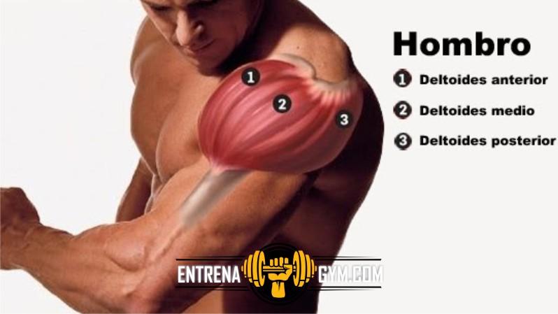 Rutina de hombro en gimnasio | ENTRENA GYM