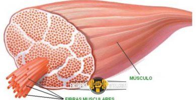 rutina-y-respiracion-muscular