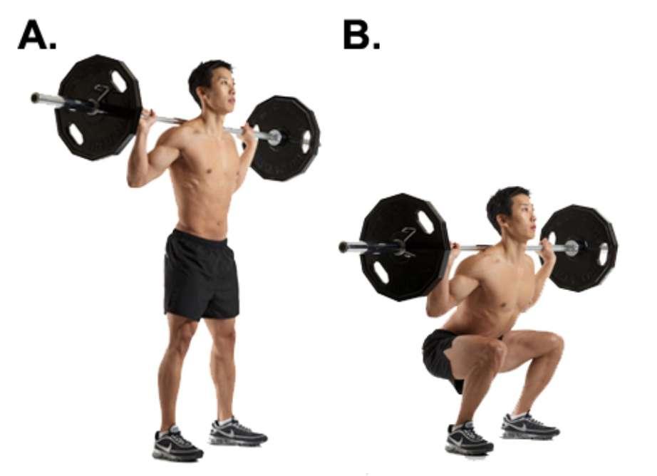 sentadillas con barra recta en el gym